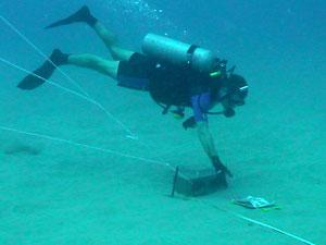 nearshore_dive_survey